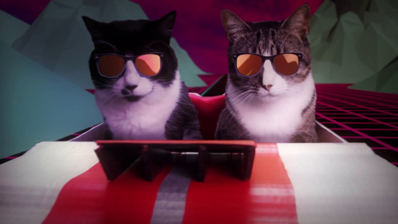 Chronique: Votre chat ne parle pas? Écoutez mieux.