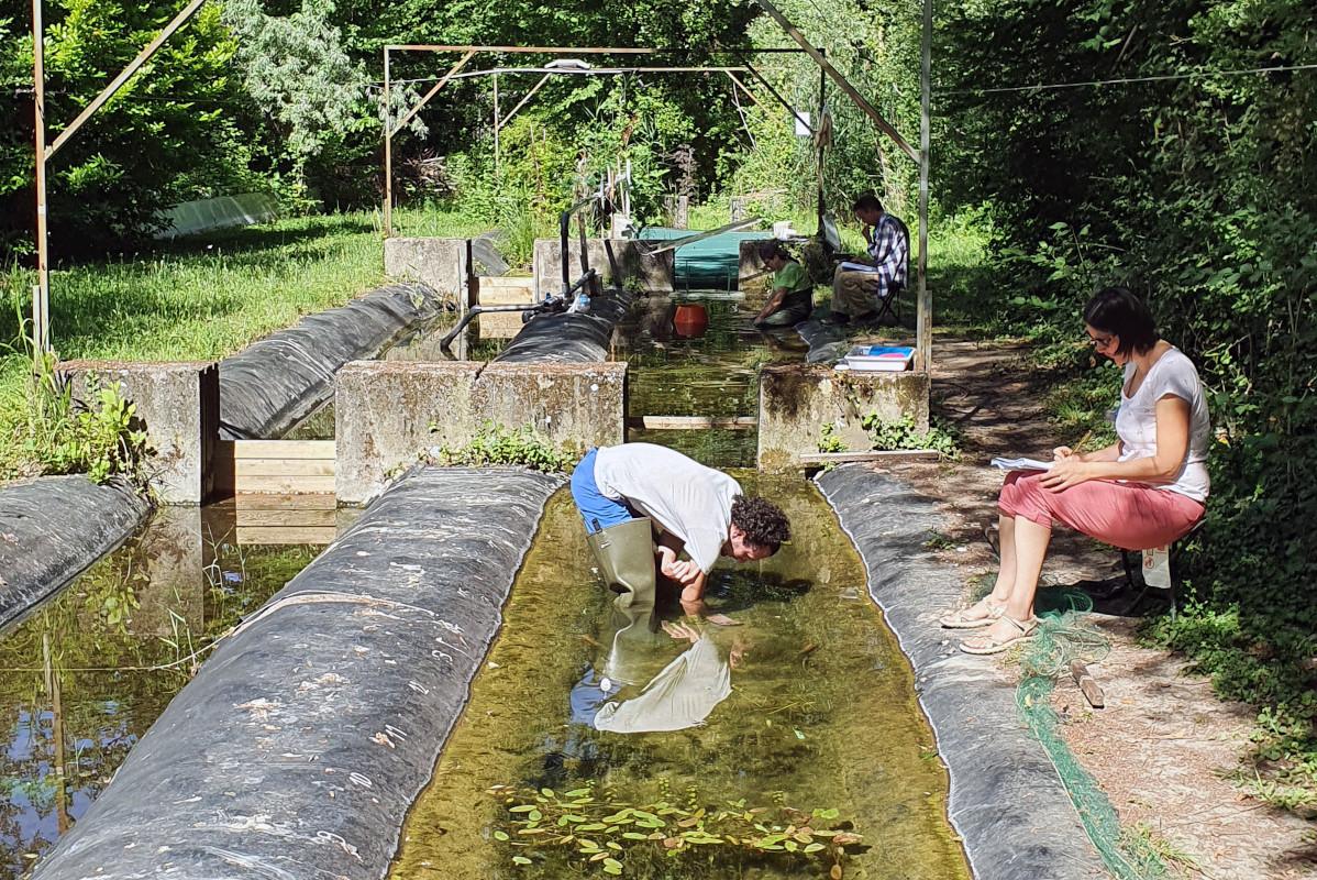 Une recherche sur les plantes aquatiques au fil de l'eau