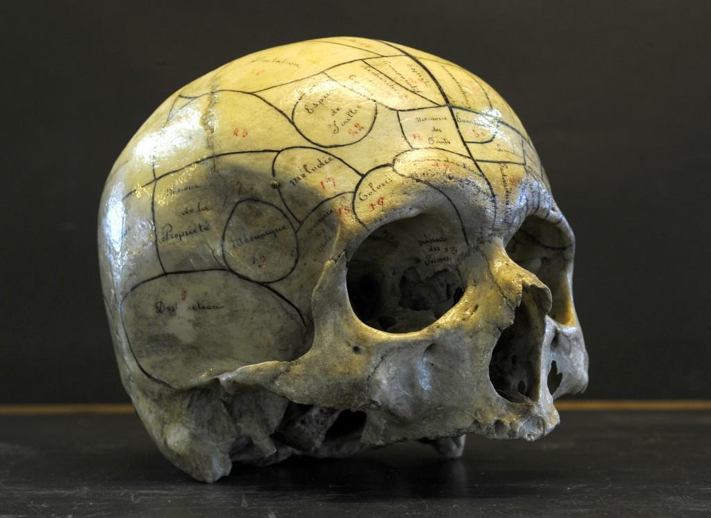 Crâne phrénologique (XIXe siècle)