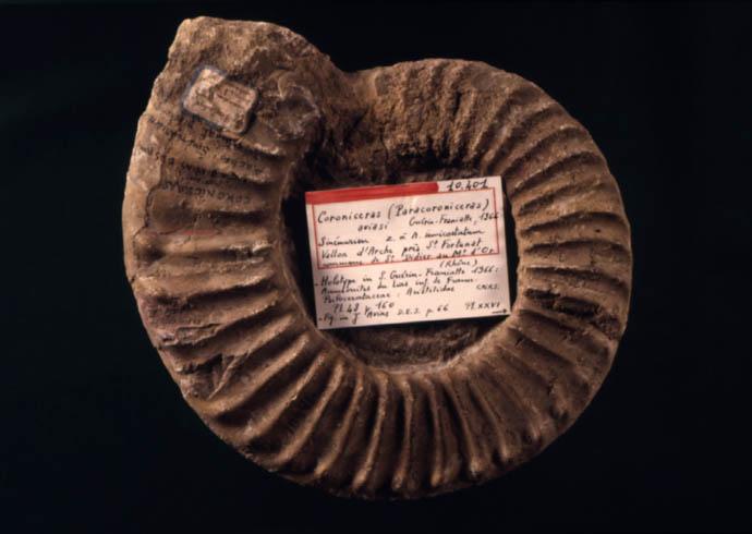 Paléontologie : des os et des hommes