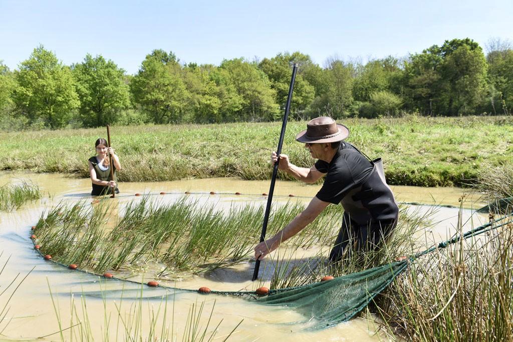 Attention à ne pas abimer les herbiers qui sont des zones de reproduction pour les tritons