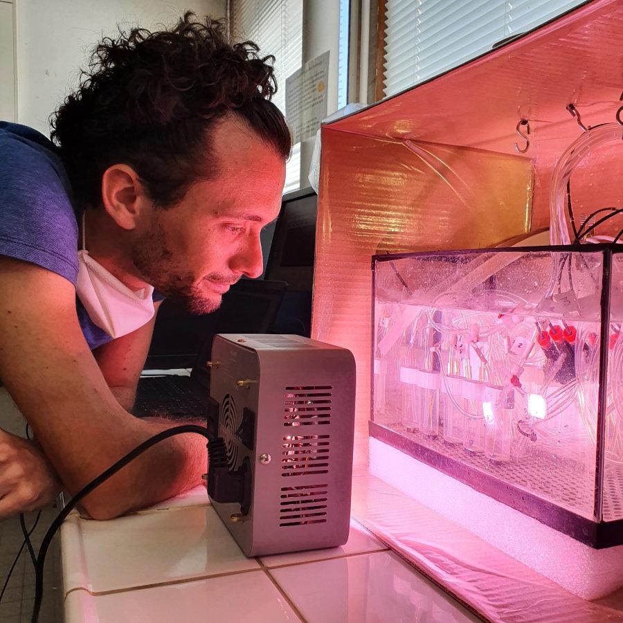 Mesure de la vitesse de photosynthèse des feuilles de plantes aquatiques