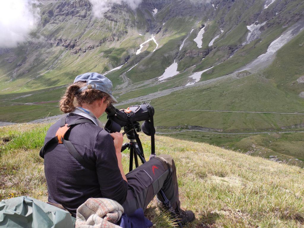 Les marmottes alpines - Sylvia les observe depuis une coline