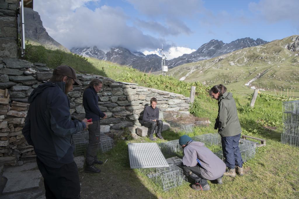 Les marmottes alpines - l'équipe autour de la salle de réveil