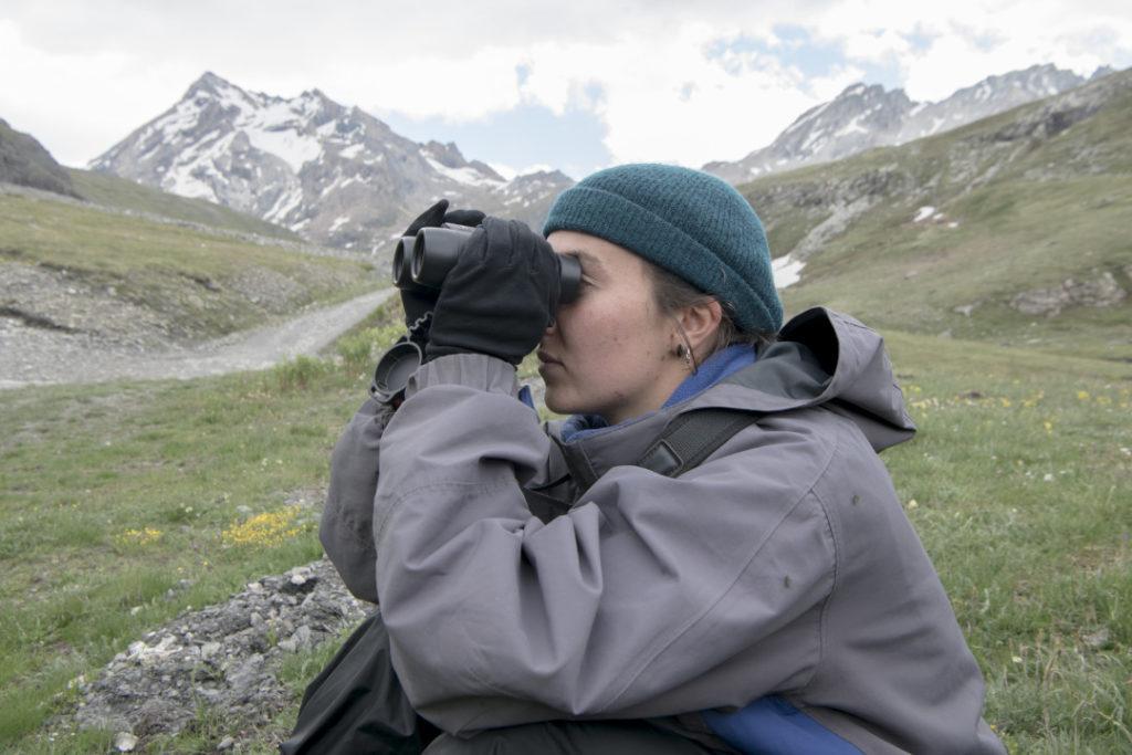 la marmotte - Une étudiante observe les marmottes alpines à distance