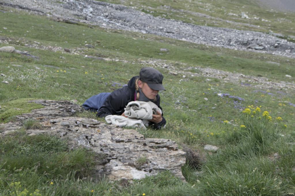 la marmotte alpines - Natacha guette la sortie des marmottes alpines